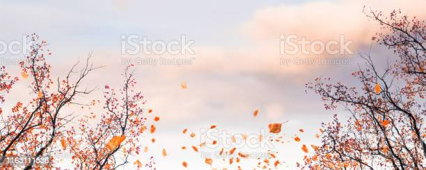 Photo of autumnal landscape with fall leaves
