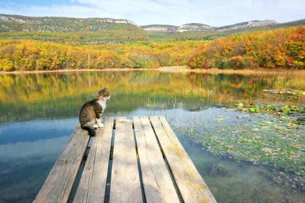 Autumnal landscape with lake picture id974161456?b=1&k=6&m=974161456&s=612x612&w=0&h=rvwaxapwh1sav32xtochfrev8dfjqdxxlb59staegbg=