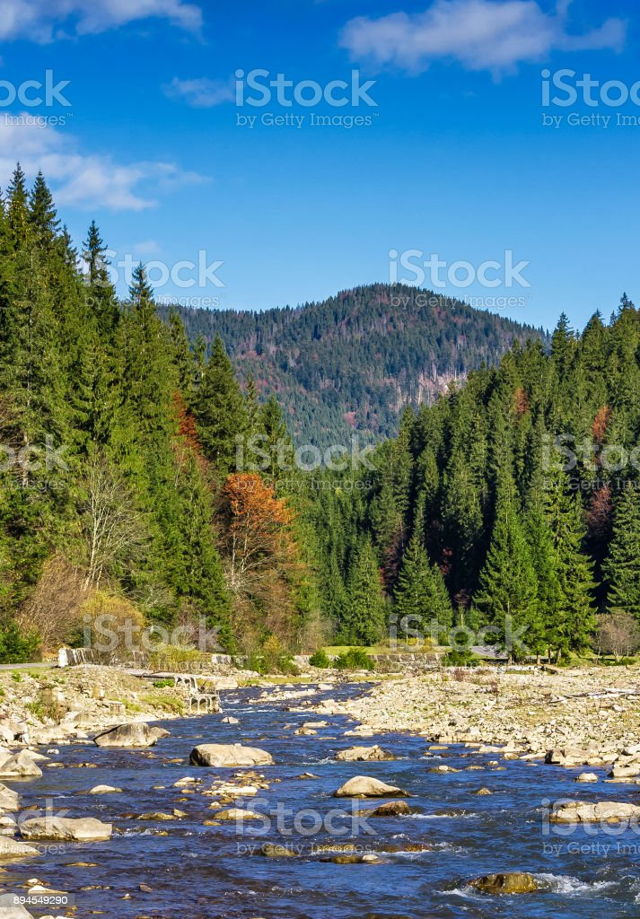 autumnal landscape with river in spruce forest stock photo