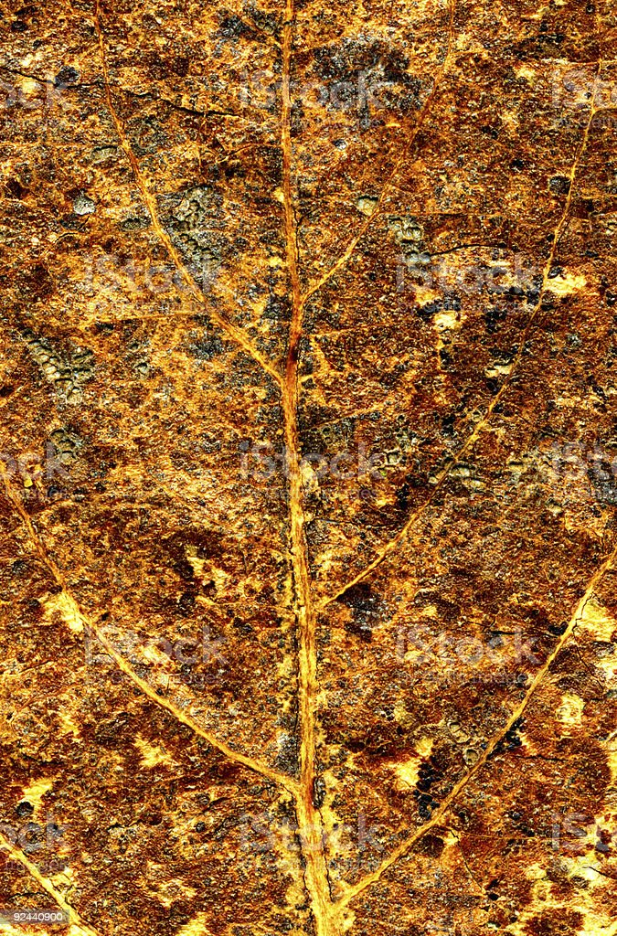 Autumnal leaf textures royalty-free stock photo