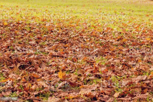 Photo of Autumnal leaves on the ground