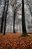 Autumnal misty forest