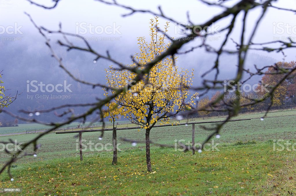 Autumnal mood royalty-free stock photo
