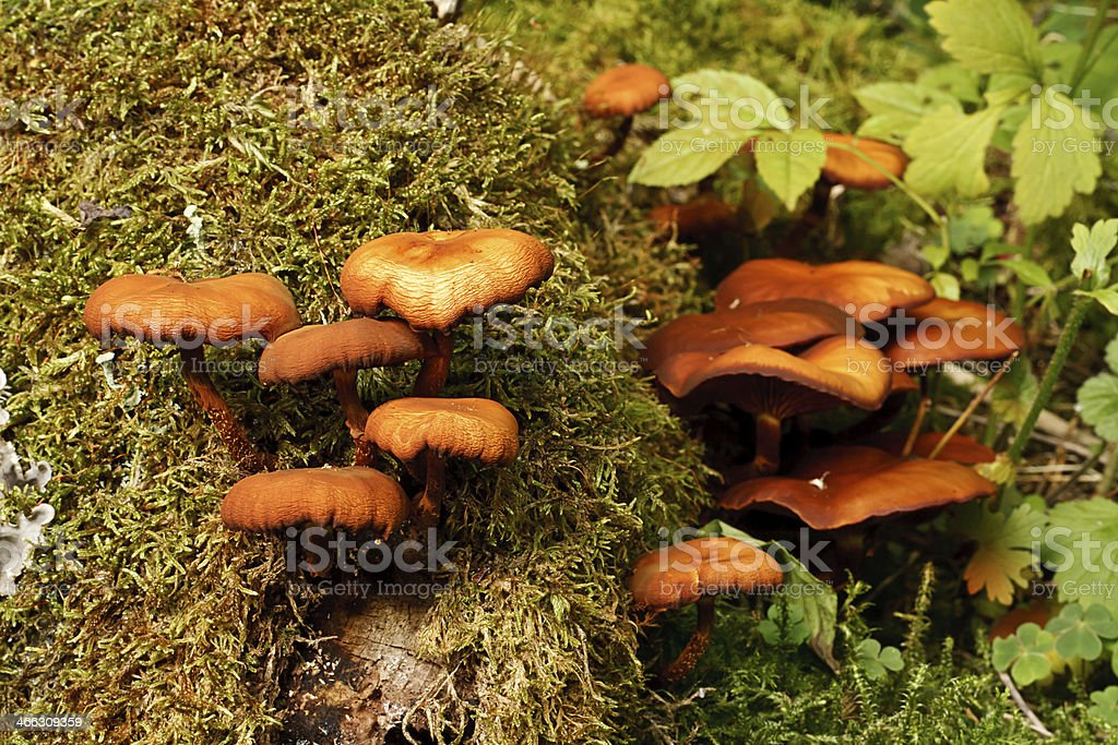 Autumnal Funghi stock photo