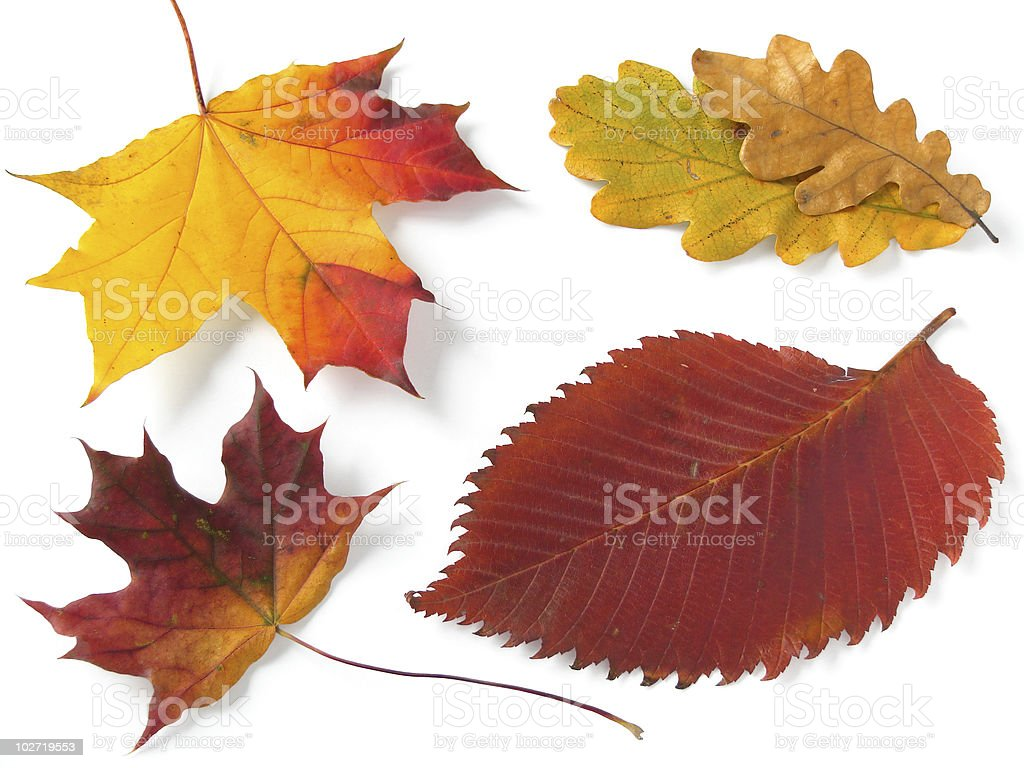 autumnal palette royalty-free stock photo