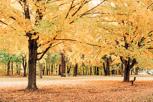 autumnal park in vermont