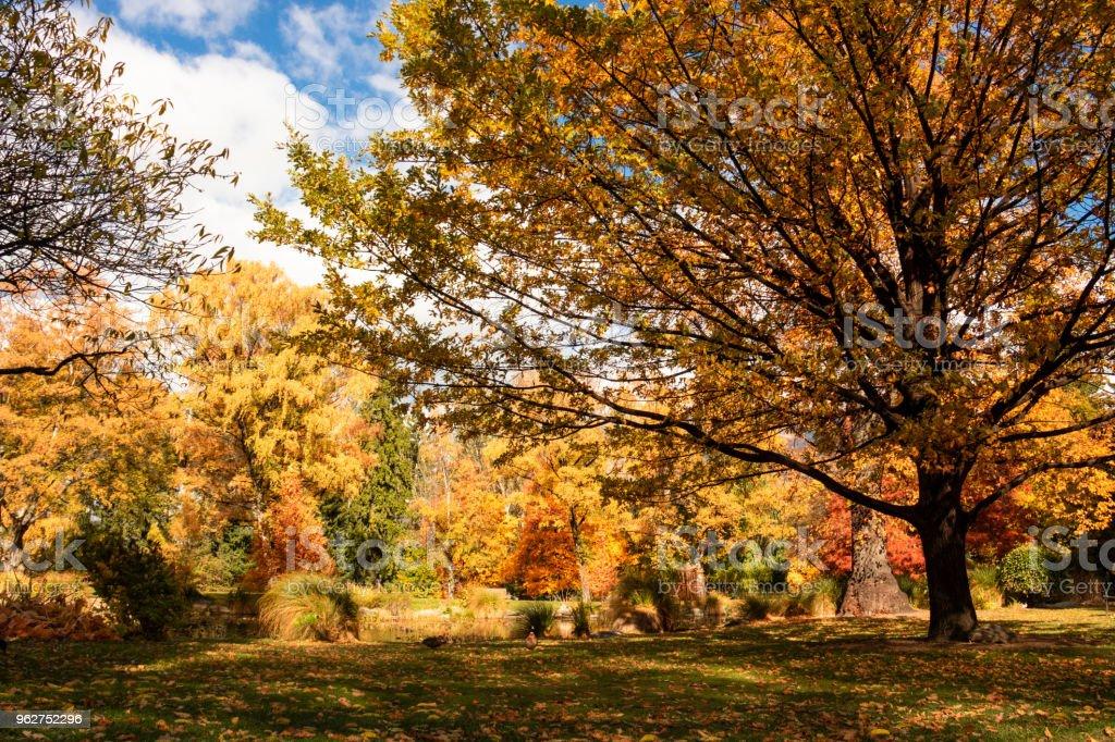Autumnal Parklands - foto stock
