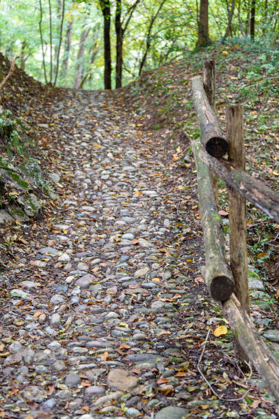 Autumnal path in the middle of the woods. stock photo