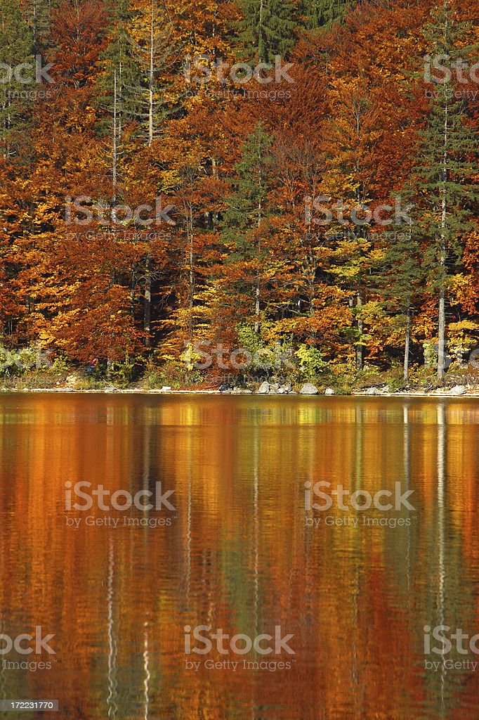 Autumnal Reflection royalty-free stock photo