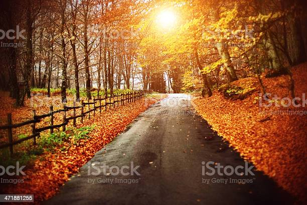 Photo of Autumnal Road