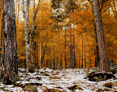 Beautiful scene with trees at the end of autumn and snow.
