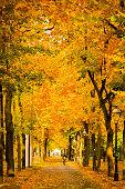 Autumnal scene in Vienna