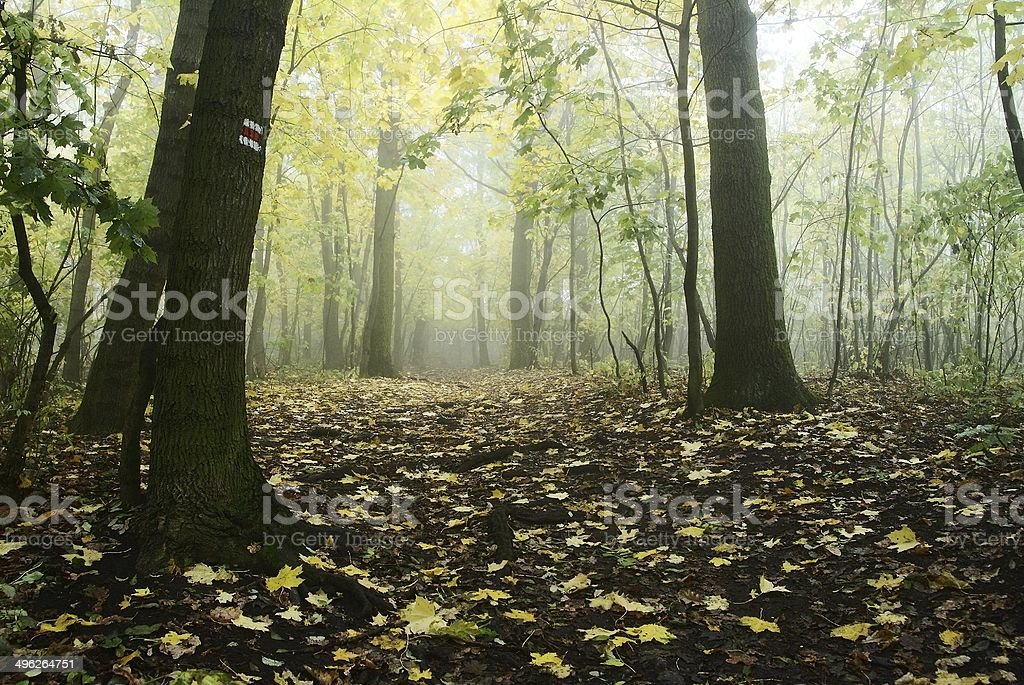 autumnal still life in deciduous temperate forest stock photo