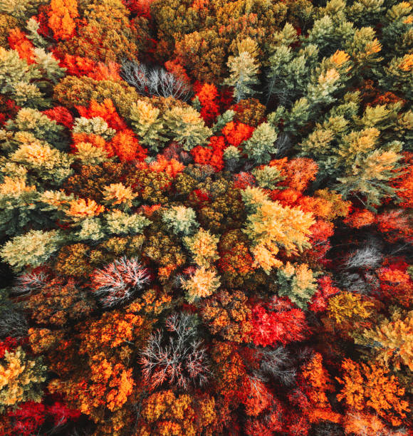 autumnal tree aerial view - autumn stock pictures, royalty-free photos & images