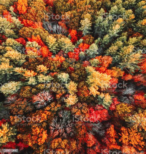 Photo of autumnal tree aerial view