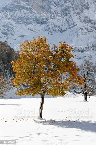 Photo of Autumnal tree in front of a mountain range