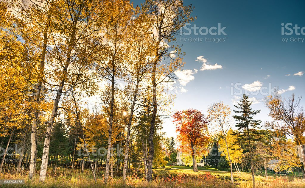 autumnal tree in Vermont royalty-free stock photo