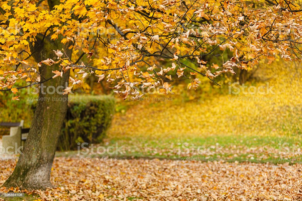 Autumnal trees in park. royalty-free stock photo