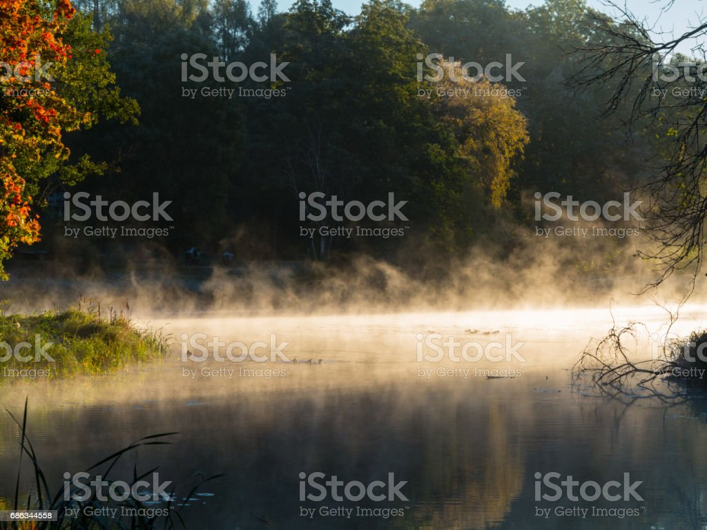 Autumnal trees over calm foggy water stock photo