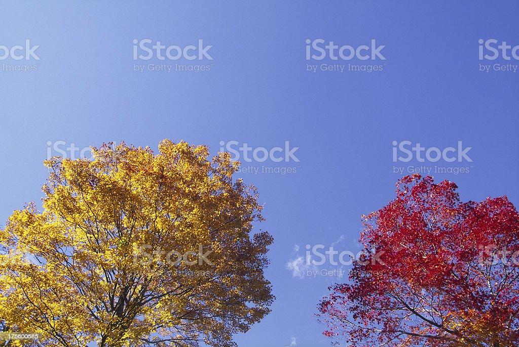 Autumnal  trees royalty-free stock photo