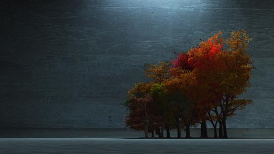 istock Autumnal Trees 886060336