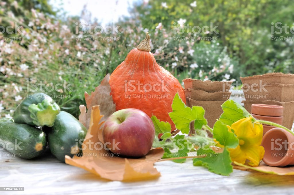 autumnal vegetables on garden table royalty-free stock photo