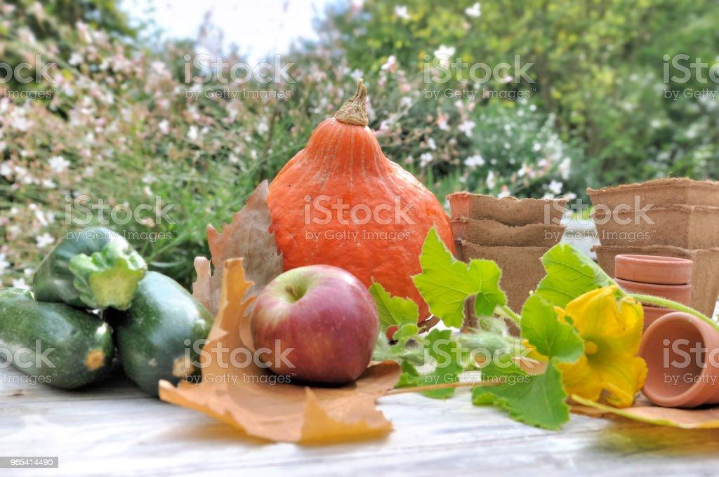 autumnal vegetables on garden table zbiór zdjęć royalty-free