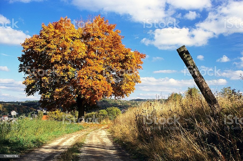 autumnal view of colored tree and rural road stock photo
