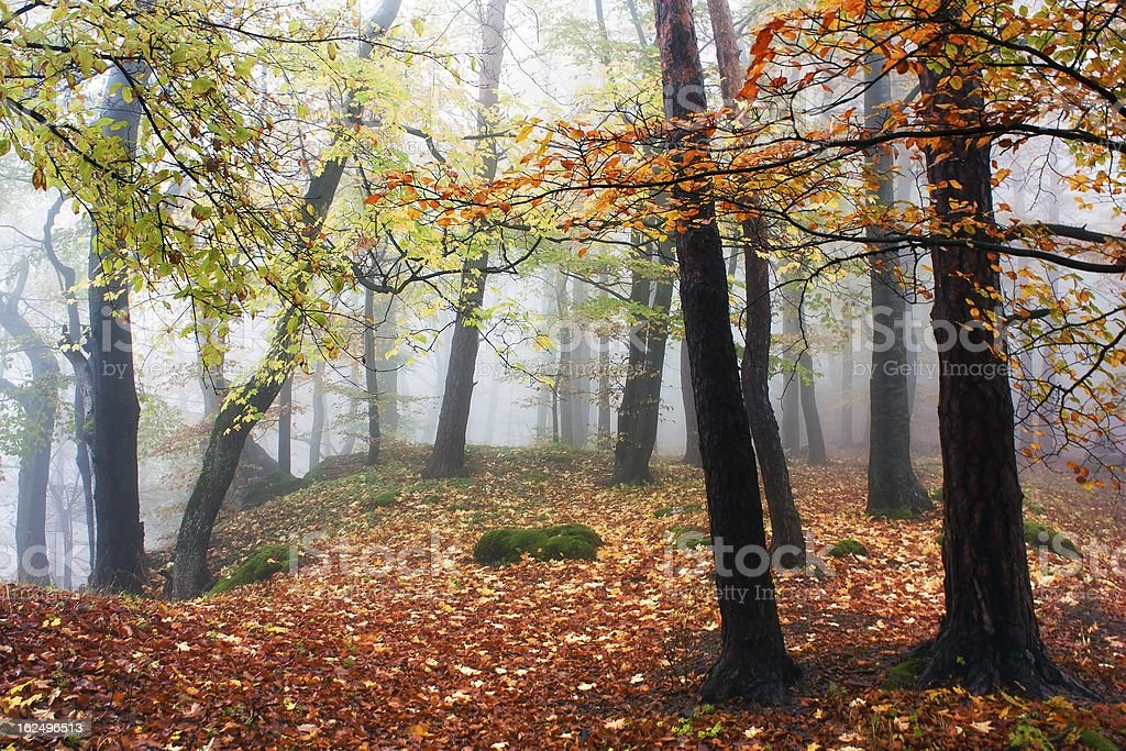 autumnal view of deciduous wood stock photo