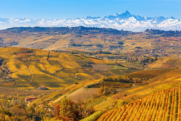 Autumnal vineyards and Alps in Piedmont, Italy. stock photo