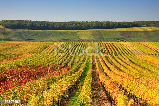 Autumnal Wineyards, EOS 5D