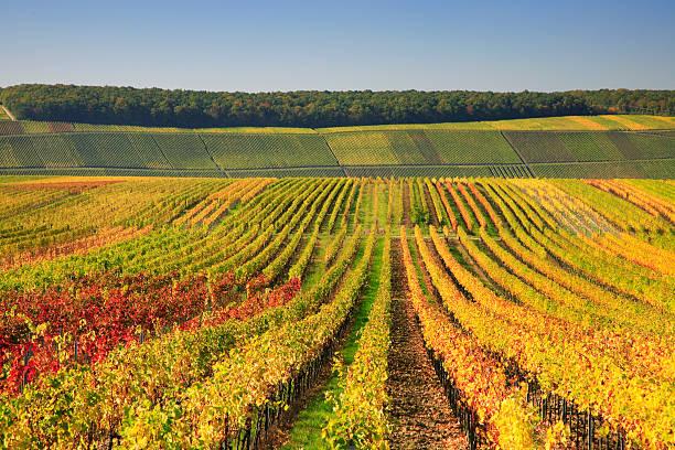 Herbstliche Weinberge – Foto