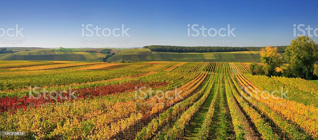 Autumnal Wineyards - fotografia de stock
