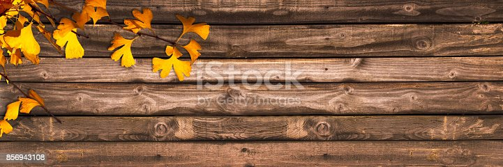 istock Autumnal wooden panoramic background with ginkgo biloba leaves, autumn concept 856943108