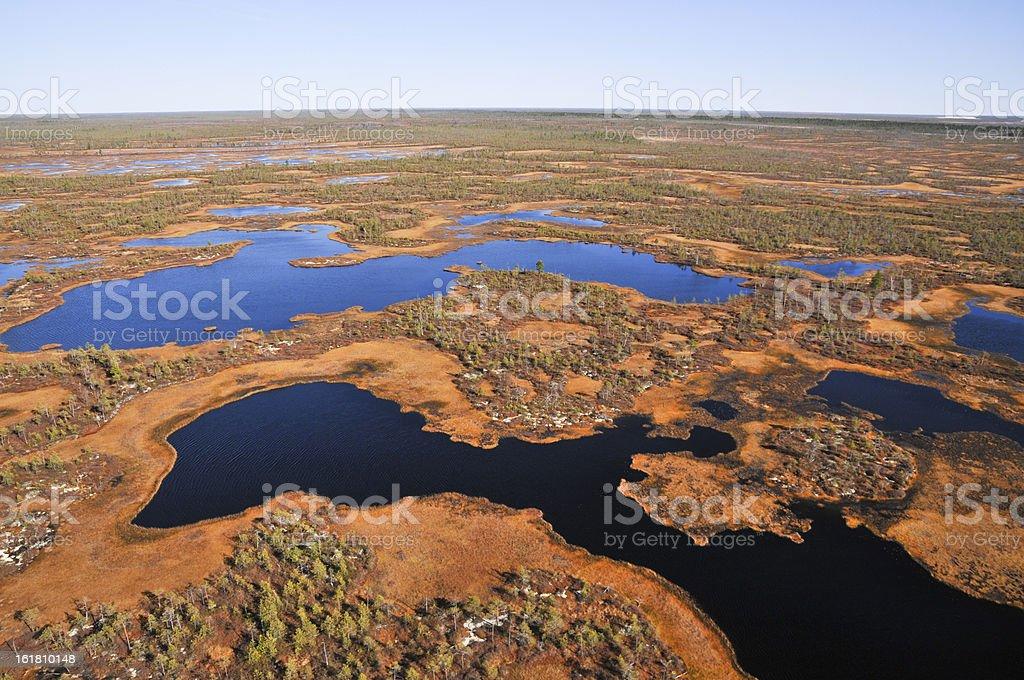 Autumn,forest-tundra. stock photo