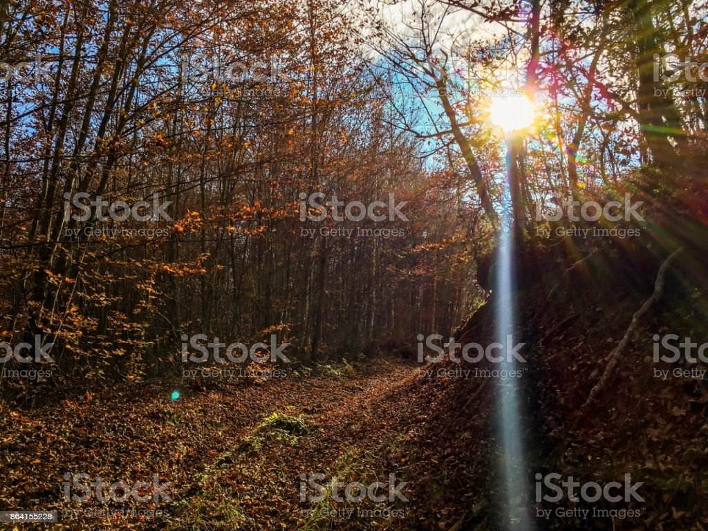 Autumnin the forest royalty-free stock photo
