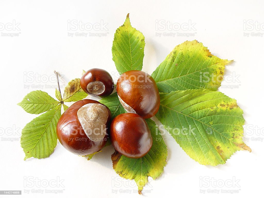 Autumn's chestnuts royalty-free stock photo