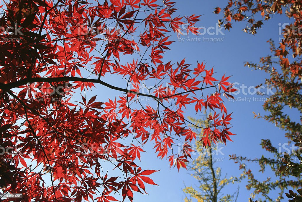 Autumn's colors royalty-free stock photo