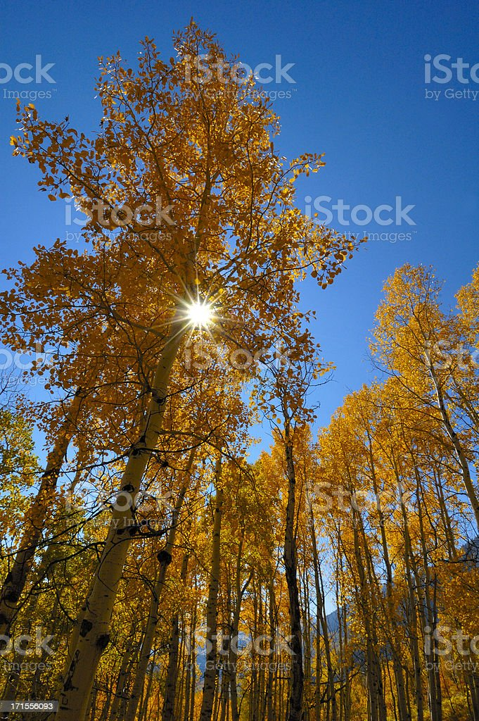 Awesome Image of Sun Shining Through the Firey Golds of Autumn!...