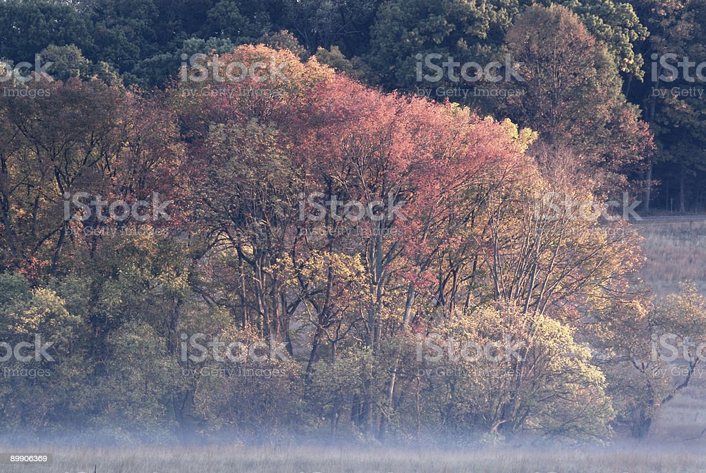 Autumn's Palette and Fog royalty-free stock photo