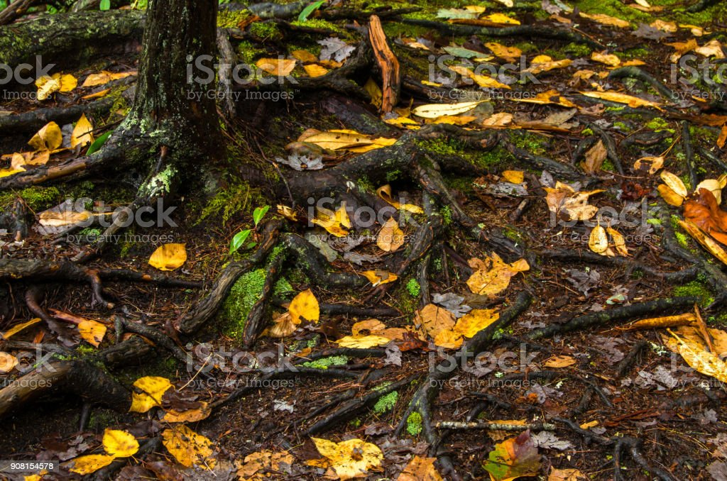 Autumns pattern stock photo