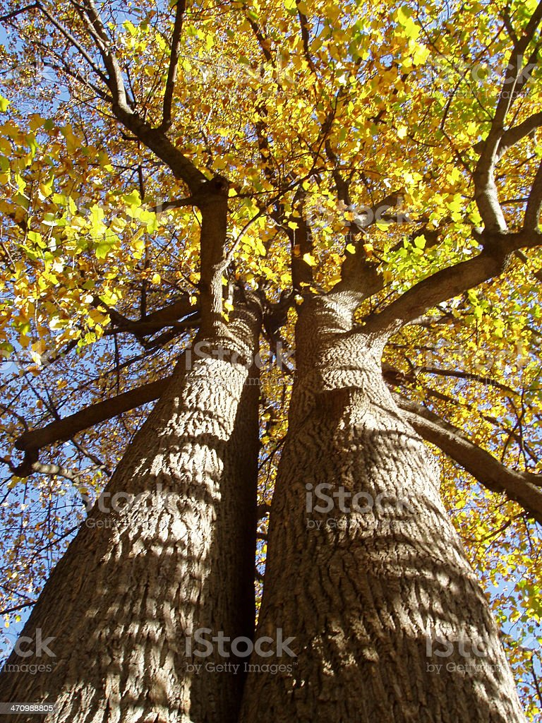 AutumnTwins royalty-free stock photo