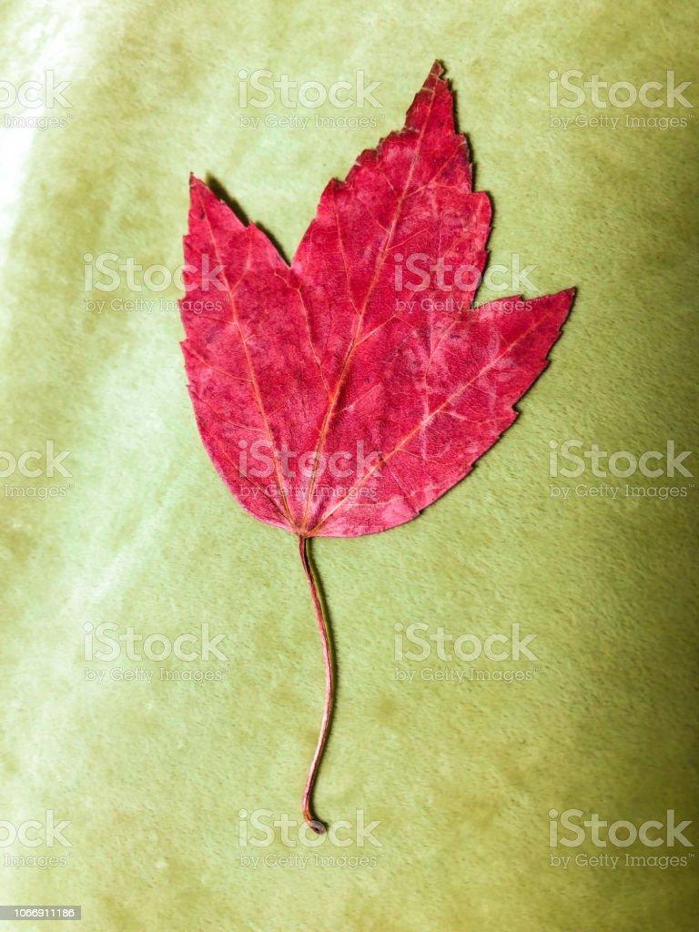 Autumun yaprak yeşil stok fotoğrafı