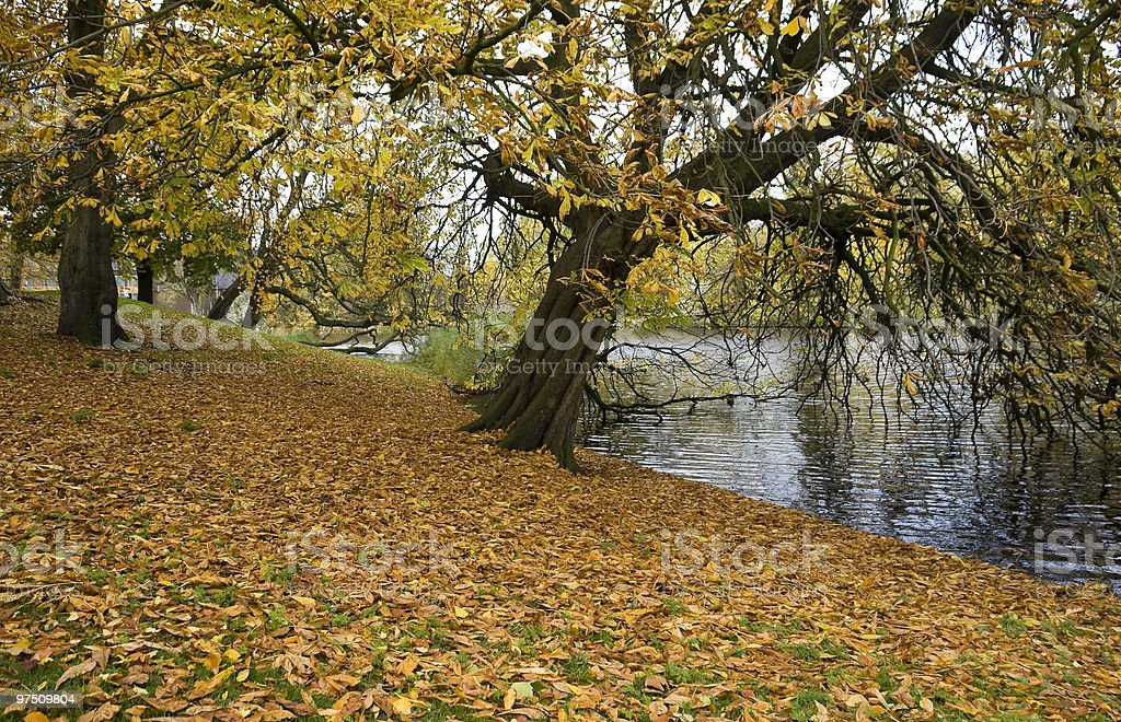 autunm leaves royalty-free stock photo