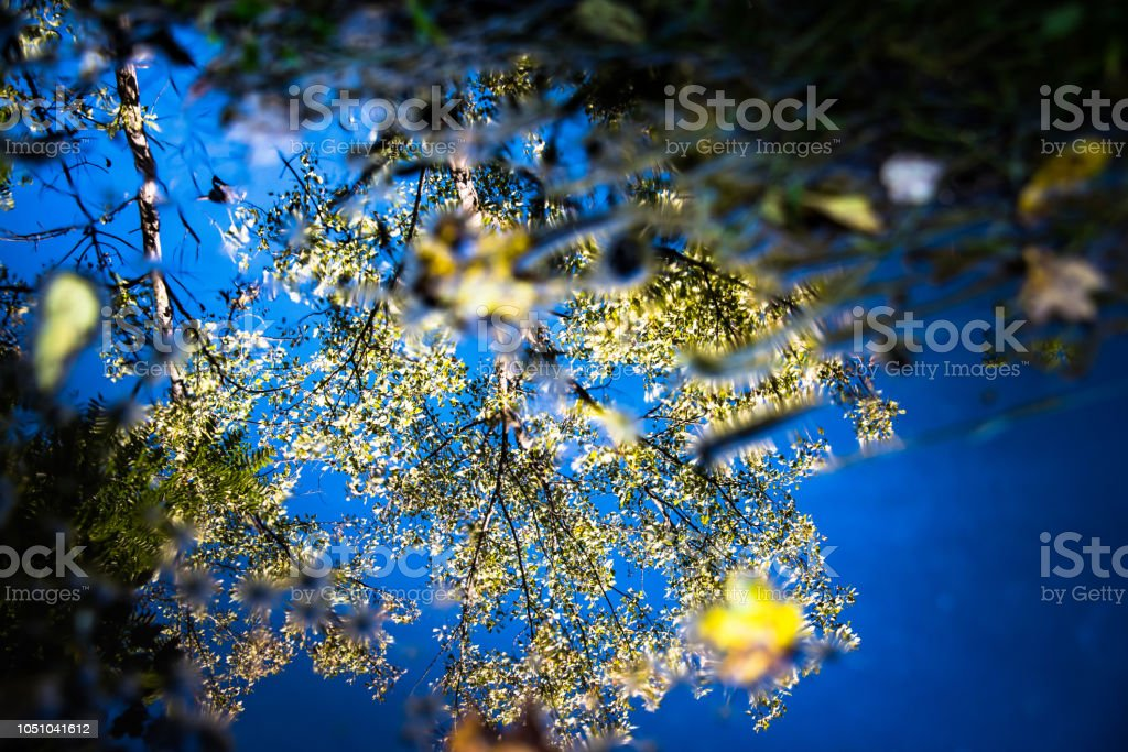 Autunm Reflections Tree and Sky stock photo