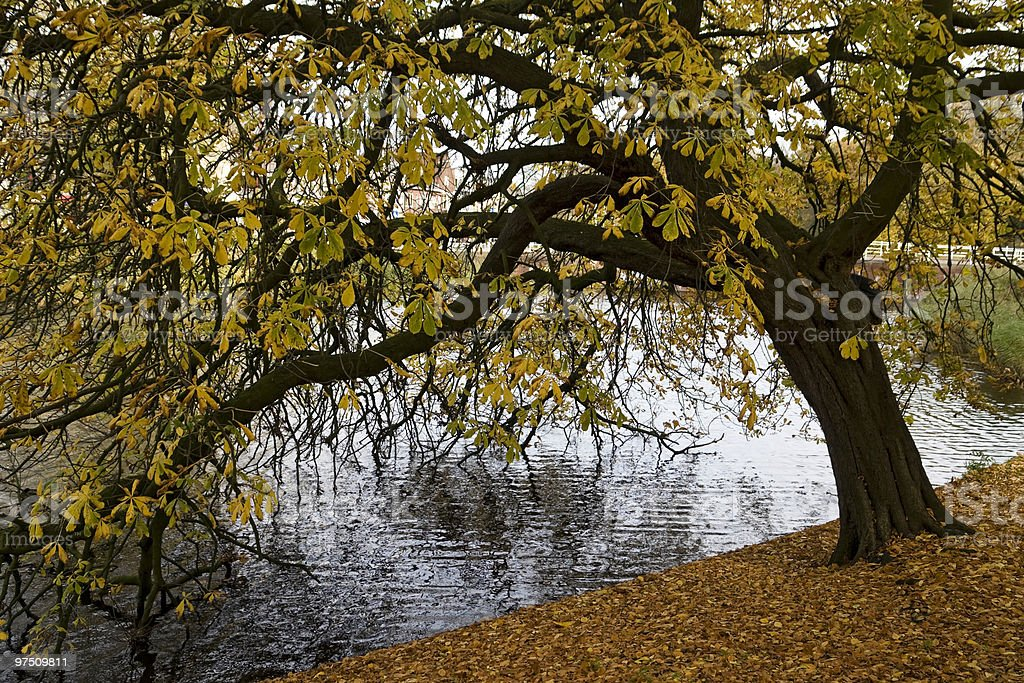 Autunm tree royalty-free stock photo