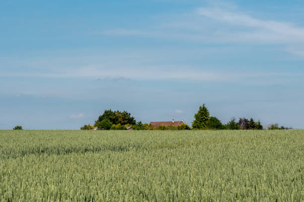 Auvers-sur-Oise Landscape at Auvers-sur-Oise, where Van Gogh painted his lasts works. val d'oise stock pictures, royalty-free photos & images