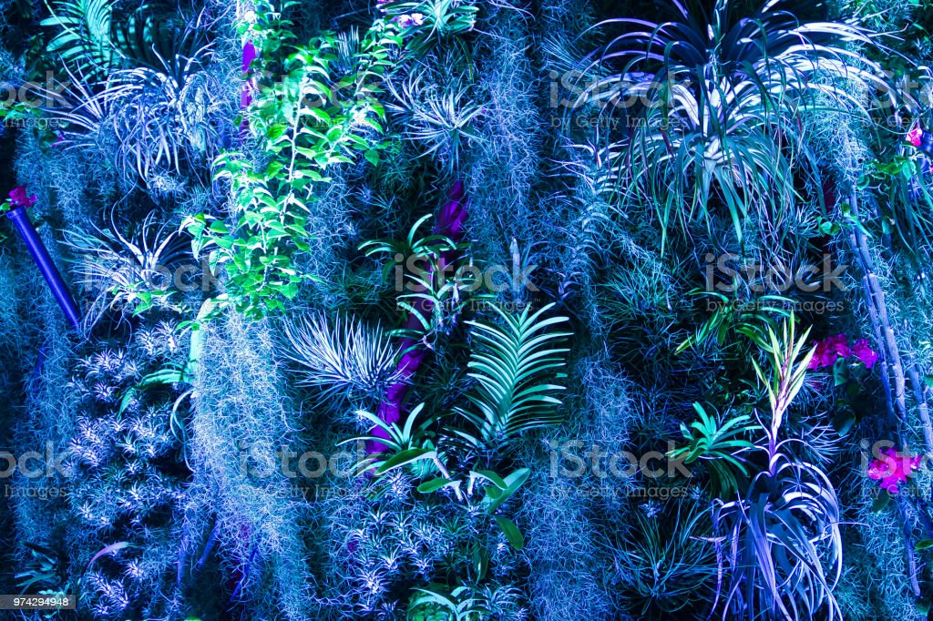 Avatar Plants in blue light stock photo