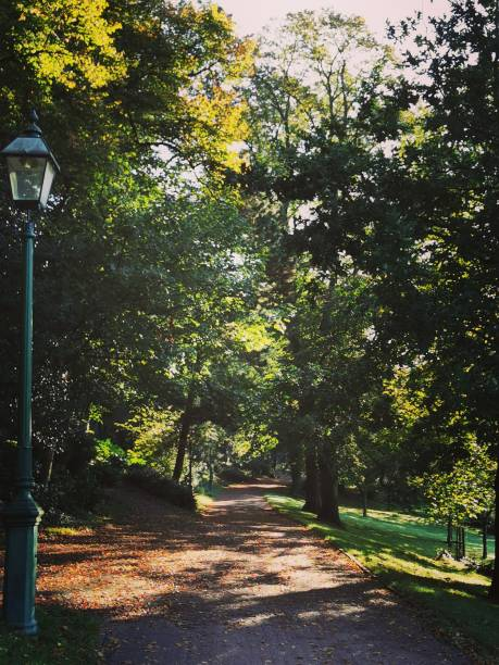 Avenham and Miller Park Autumn has arrived in the park in Preston, Lancashire miller park stock pictures, royalty-free photos & images