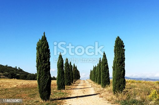 Row of Cypress Tress in Southern France